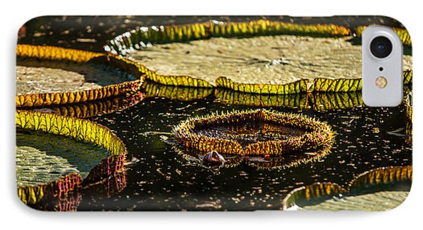 Evening Light On The Leaves Of Victoria Regia. Royal Botanical Garden  In Mauritius IPhone Case by Jenny Rainbow