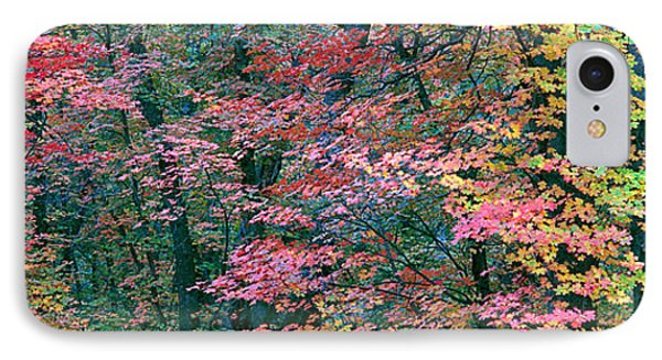 Fall Colors At Fourth Of July Canyon IPhone Case by Panoramic Images