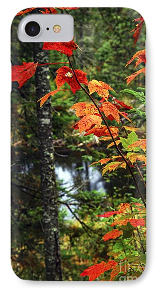 Fall Forest And River IPhone Case by Elena Elisseeva