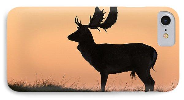 Fallow Deer Buck At Sunset Denmark IPhone Case by Duncan Usher
