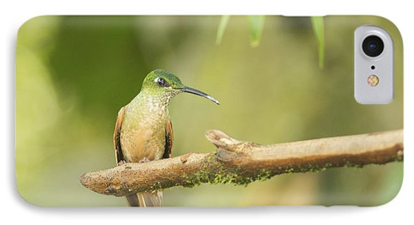Fawn-breasted Brilliant Hummingbird IPhone Case