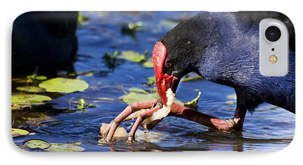 Feeding Red Billed Coot Bird IPhone Case by Jorgo Photography - Wall Art Gallery