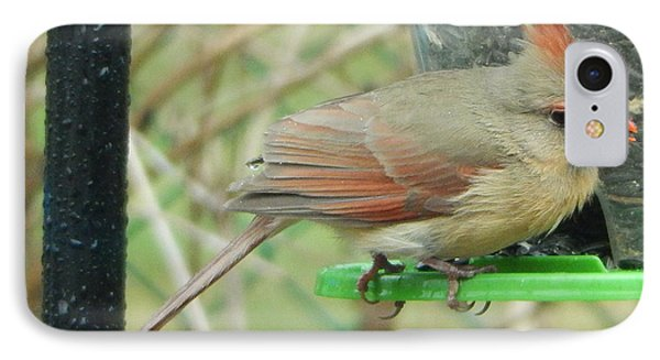 IPhone Case featuring the photograph Female Cardinal by Betty-Anne McDonald