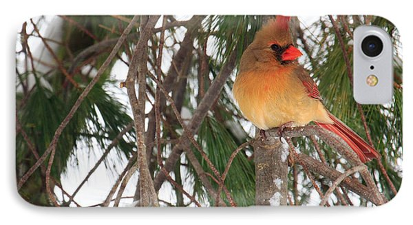 Female Cardinal Phone Case by Everet Regal