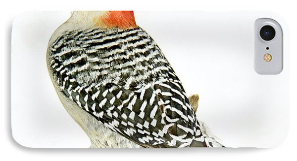 Female Redbellied Woodpecker In Winter Animal Portrait IPhone Case by A Gurmankin