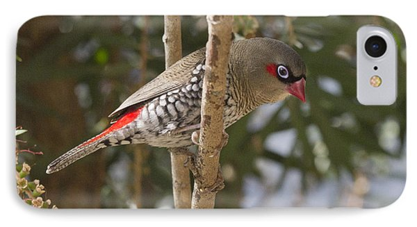IPhone Case featuring the photograph Fire Tail Finch by Serene Maisey