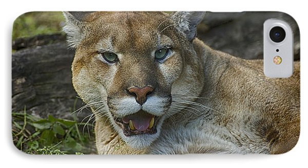 Florida Panther IPhone Case by Anne Rodkin