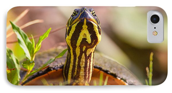 Florida Redbelly Turtle IPhone Case by Celso Diniz