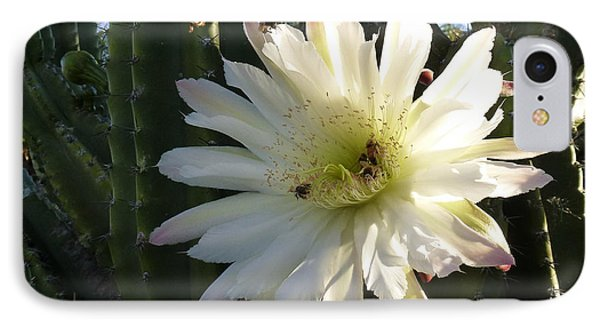 IPhone Case featuring the photograph Flowering Cactus 1 by Mariusz Kula