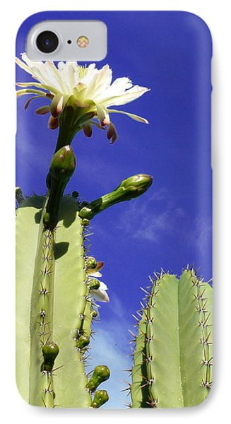 IPhone Case featuring the photograph Flowering Cactus 2 by Mariusz Kula