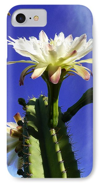 Flowering Cactus 3 IPhone Case by Mariusz Kula