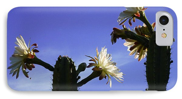 Flowering Cactus 4 IPhone Case by Mariusz Kula