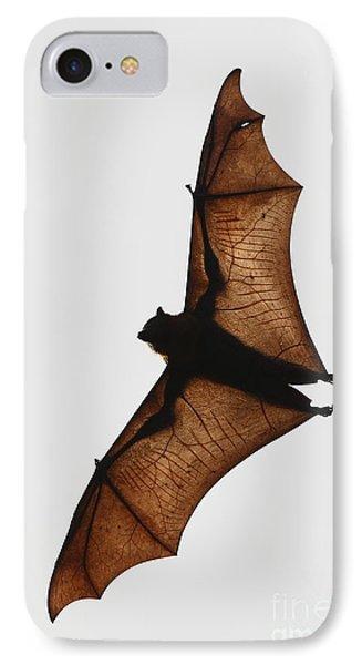 Flying Bat IPhone Case by Craig Dingle