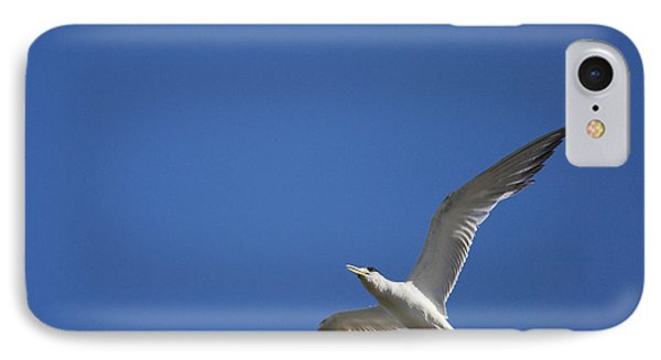 Flying Crested Tern IPhone Case