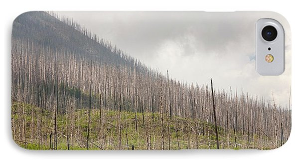Forest Burnt By Mount Shanks Wild Fire IPhone Case by Ashley Cooper