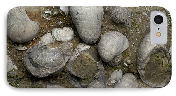 Fossilised Jurassic Oyster Bed IPhone Case by Sinclair Stammers