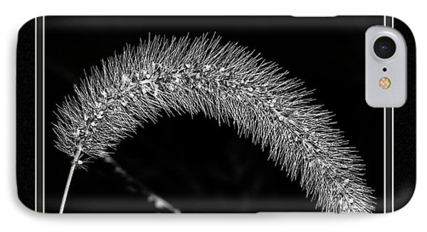Foxtail Grass IPhone Case by Charles Feagans
