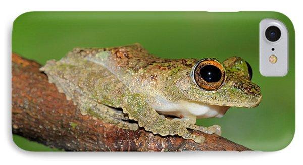 Frilled Tree Frog, Malaysia IPhone Case by Fletcher & Baylis
