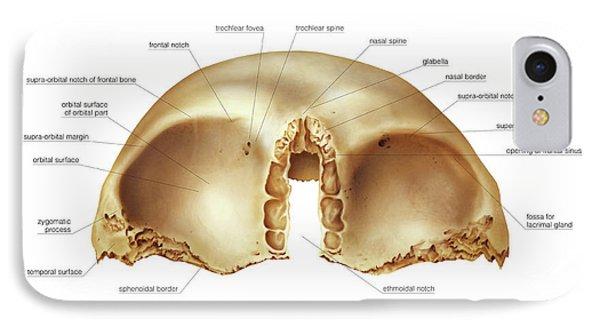 Frontal Bone IPhone Case