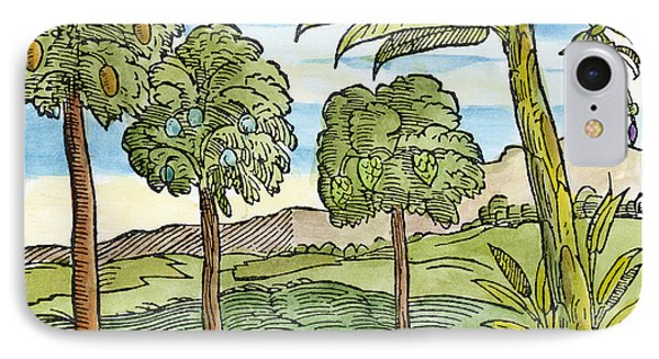 Fruit Trees Of Hispaniola IPhone Case by Granger