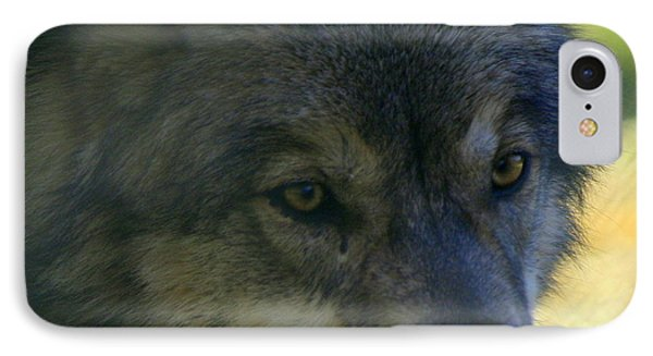 Gray Wolf IPhone Case by Neal Eslinger
