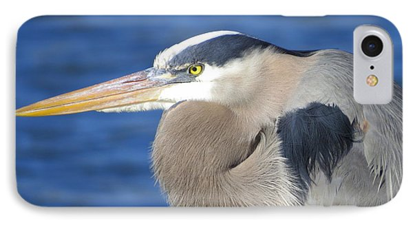 IPhone Case featuring the photograph Great Blue Heron Profile by Phyllis Beiser
