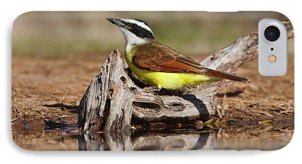 Flycatcher iPhone 7 Case - Great Kiskadee (pitangus Sulphuratus by Larry Ditto
