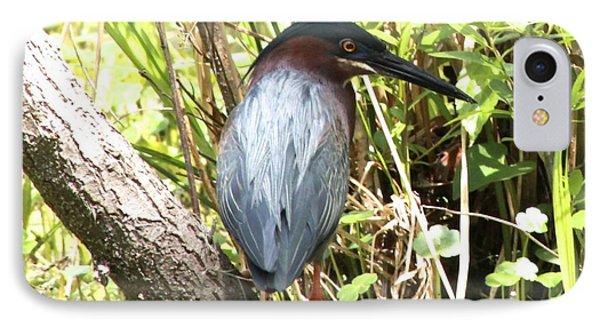 Green Heron IPhone Case by Jeanne Kay Juhos