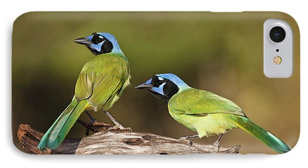 Green Jays (cyanocoras Yncas IPhone Case by Larry Ditto
