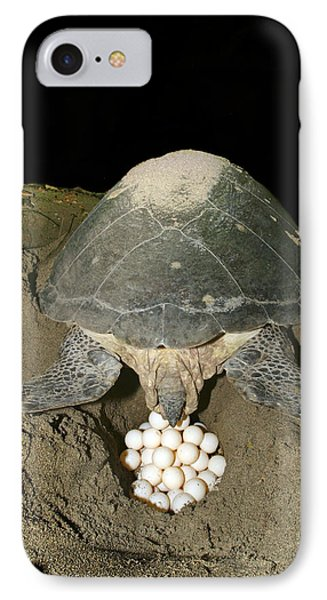 Green Turtle Laying Eggs IPhone Case