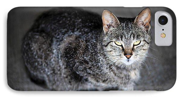 Grey Cat Portrait Phone Case by Elena Elisseeva
