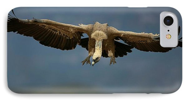 Griffon Vulture Flying IPhone 7 Case