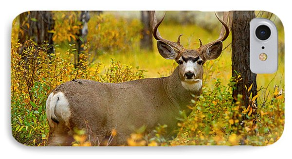 IPhone Case featuring the photograph Gros Ventre Buck by Aaron Whittemore