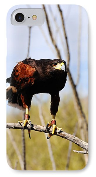 Harris's Hawk IPhone Case by Bonnie Fink