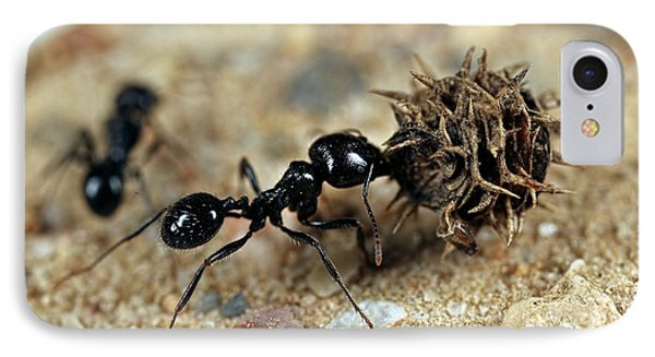 Ant iPhone 7 Case - Harvester Ant by Frank Fox