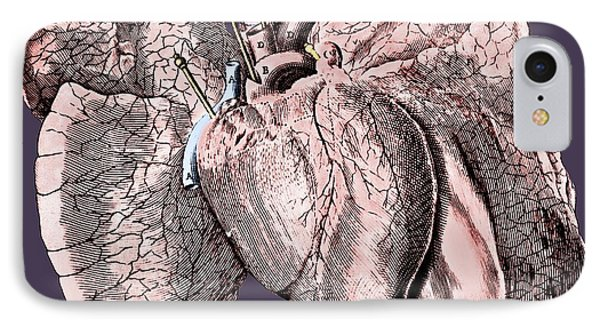 Heart And Lung Anatomy IPhone Case by Science Photo Library