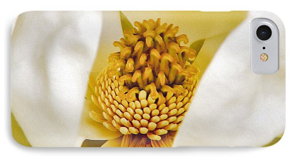 Heart Of Magnolia IPhone Case by Debra Crank