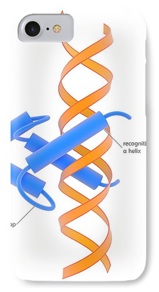 Helix-loop-helix Dna-binding Domain IPhone Case by Science Photo Library