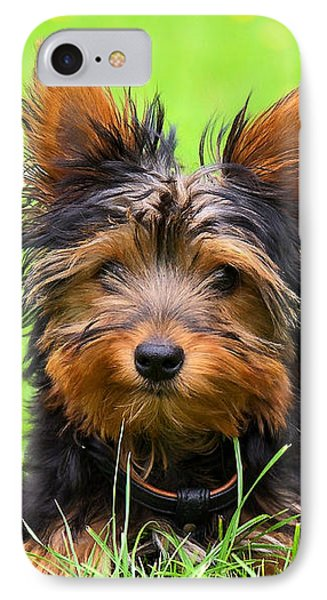 Hello Toby Phone Case by Angela Doelling AD DESIGN Photo and PhotoArt
