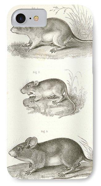 1. Hesperomys Texanus, Texas Mouse 2. Perognathus Flavus IPhone Case