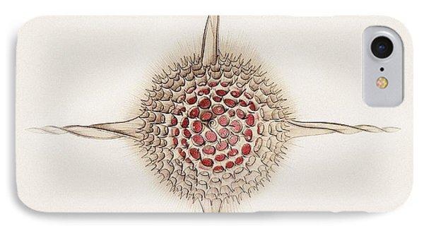 Hexastylus Radiolarian, Artwork IPhone Case by Mehau Kulyk