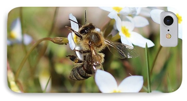 Honeybee On Bluet IPhone Case by Lucinda VanVleck