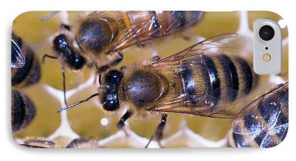 Honeybee iPhone 7 Case - Honeybees On Honeycomb by Simon Fraser/science Photo Library