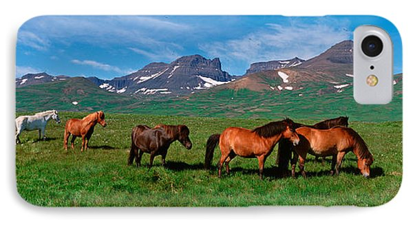 Horses Standing And Grazing In A IPhone Case