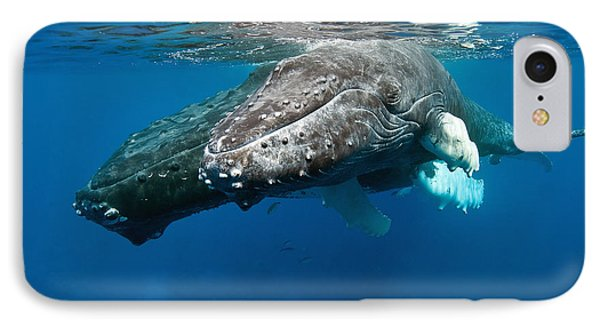 Humpback Whale And Calf IPhone Case by Andrew J. Martinez