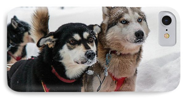 Husky Dogs Pull A Sledge IPhone Case by Photostock-israel