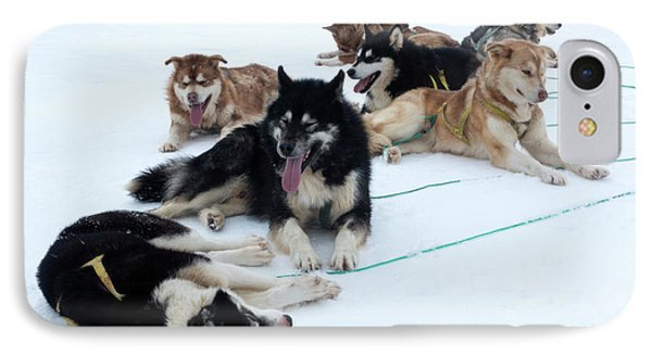 Husky Sled Dogs IPhone Case