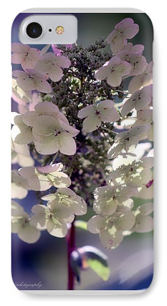 IPhone Case featuring the photograph Hydrangea  by Debra Forand