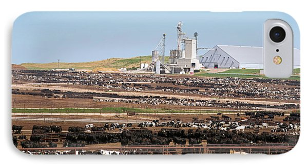 Intensive Cattle Farm IPhone Case by Jim West