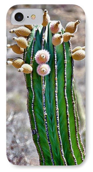 Isla De Espiritu Santo, Baja, Mexico IPhone Case by Mark Williford